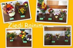 ziedi_Rainim